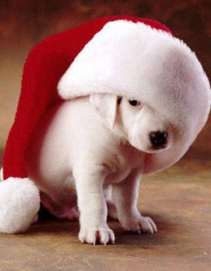 Pet Pics with Santa this Sat.