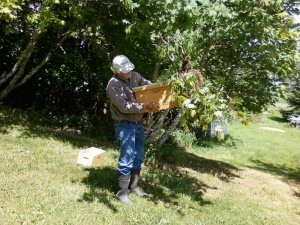 Beekeepers will remove swarms at no cost