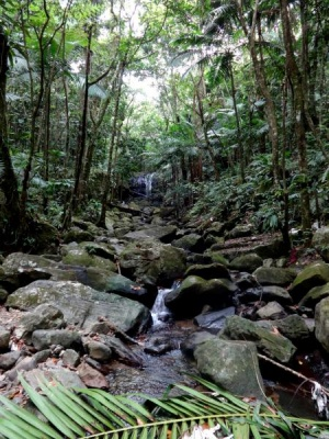 Lost in El Yunque