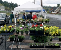 Market under way in Winlock
