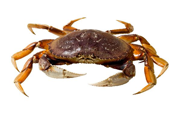 Will there be shellfish for the holidays?