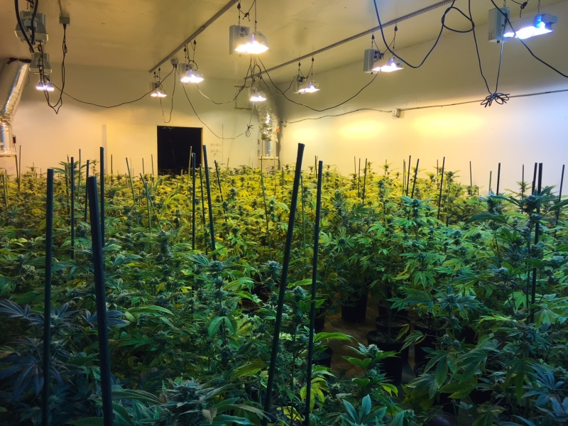 Photo by Cheri Mitchell - Illegal grow discovered in Vader.