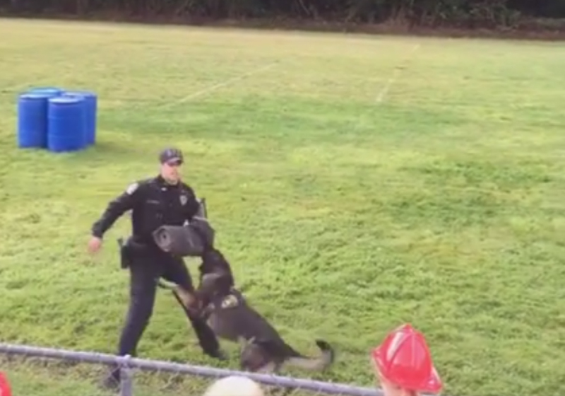 Raymond Police hold demonstration for K9 Ciko
