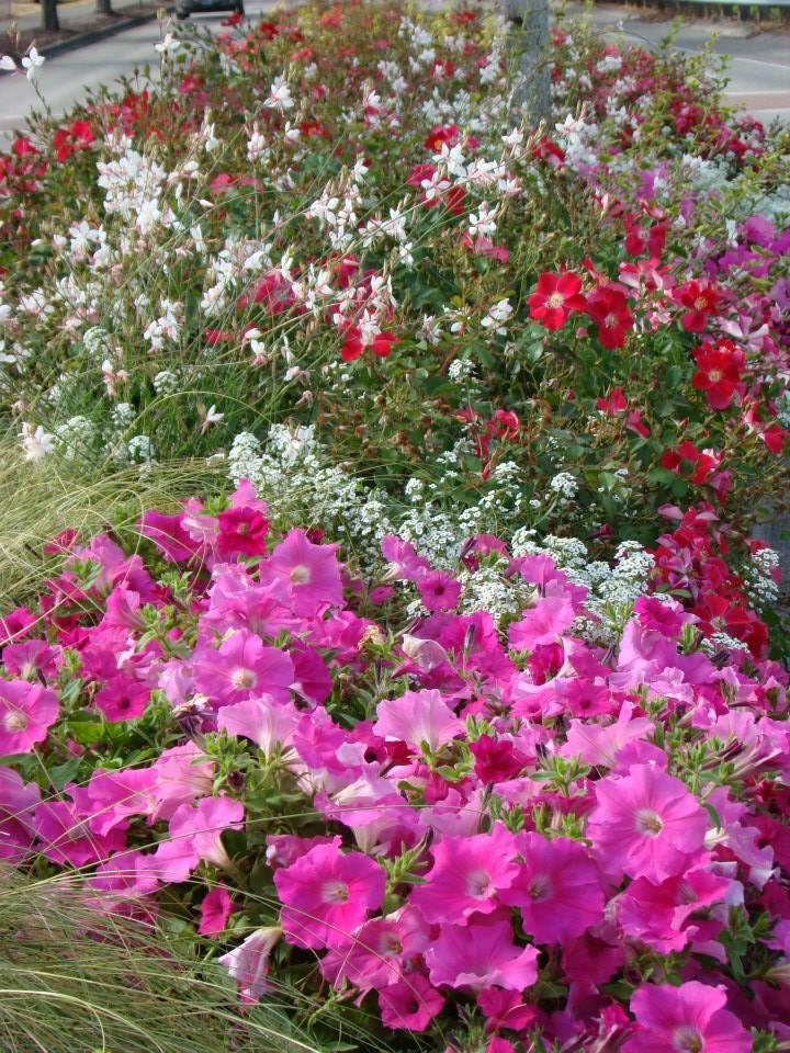 Castle Rock in Bloom