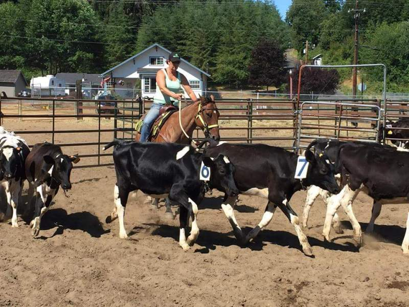 Ranch Sorting held at Pacific County Fair Grounds