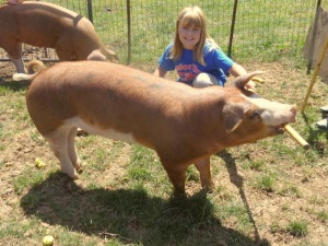 Livestock Auction Friday