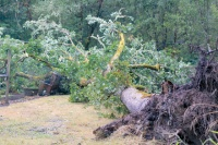 Massive storm leaves its mark on South County residents