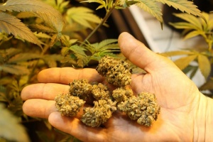 Medical Marijuana soon available at the Port