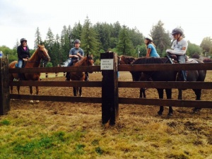 Open Class Horses now at this year's Fair