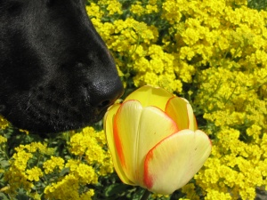 Gog and flower