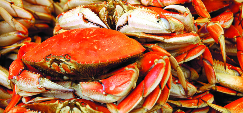 Commercial crab fishing to open Jan. 4 on Washington coast