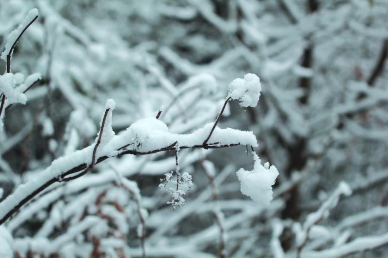 Polar vortex hits the Pacific Northwest