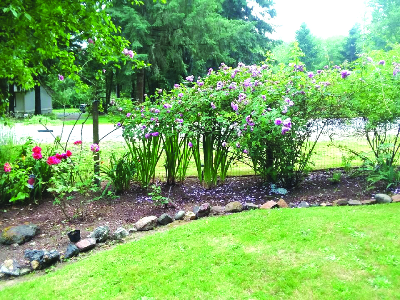 Town Crier Yard of the Week: A determined yard