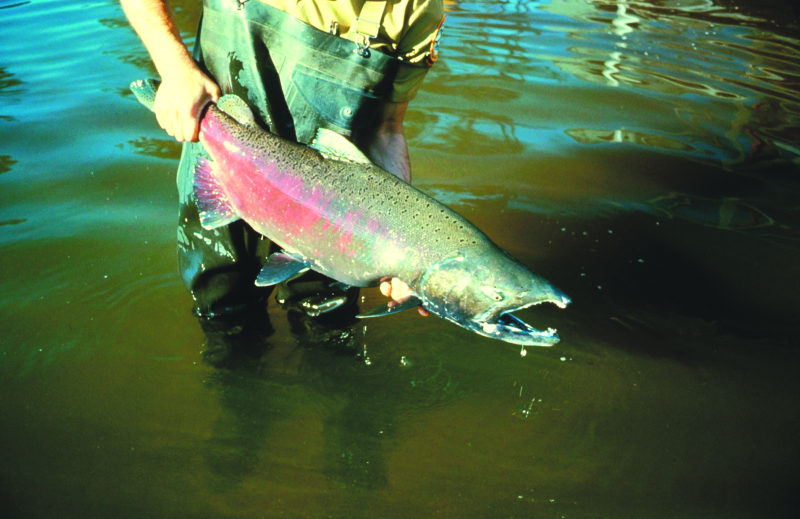 Coho again remains the best chance for fishing in 2019